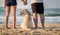 Pet Família de Marruá