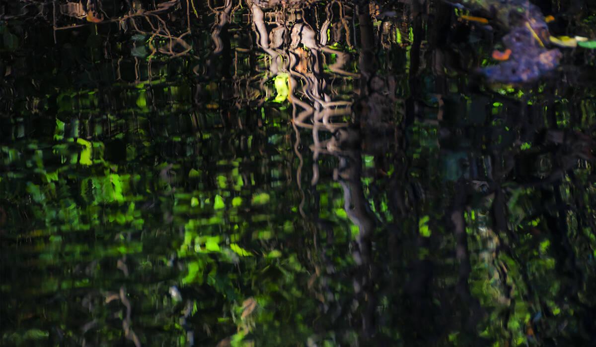 de Visões do Pantanal