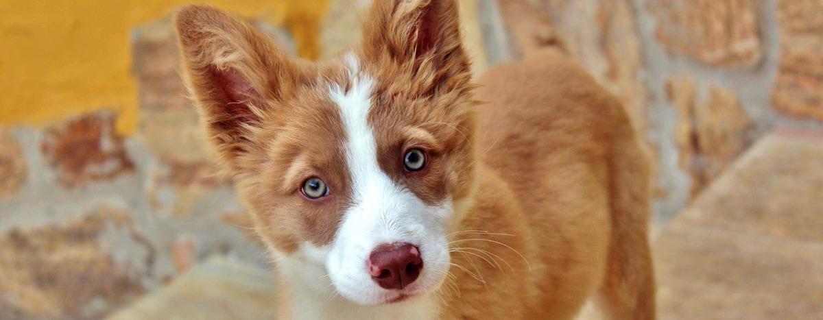 Imagem capa - Gaia, nosso dog! por Tuca Filmes
