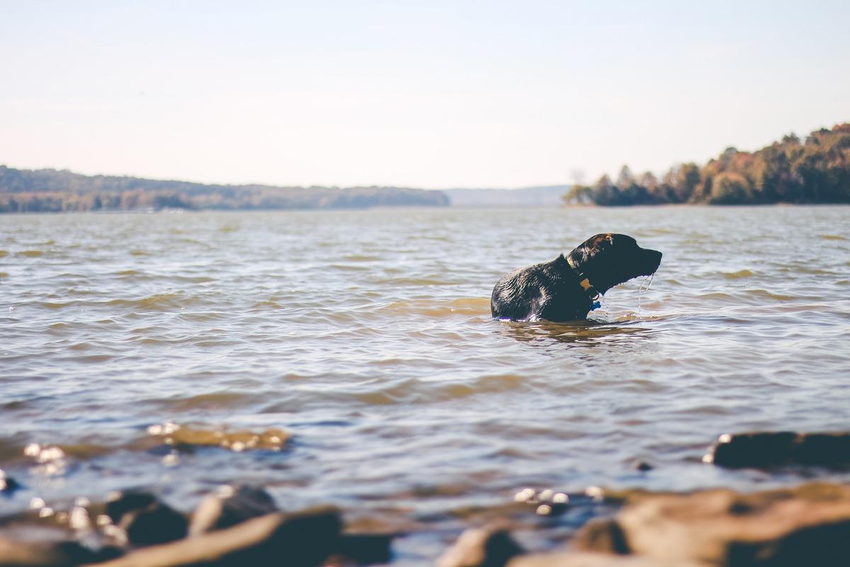 Imagem capa - Um bom dia na praia! por Cupcake by Alboom