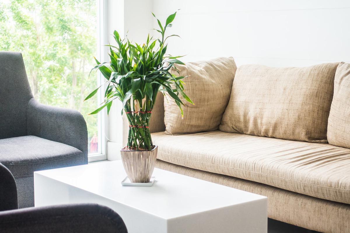 sofá bege e planta