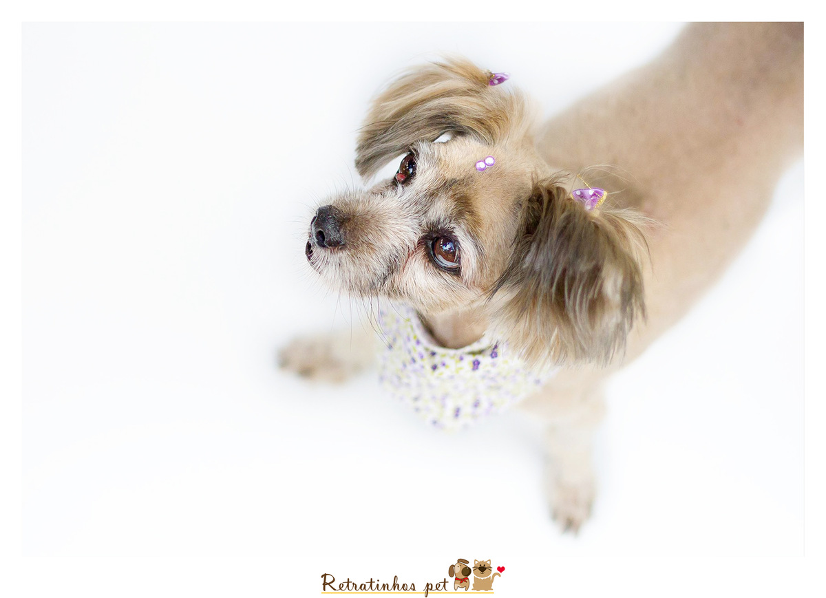 Imagem capa - Sobre ter um cão por Retratinhos Pet