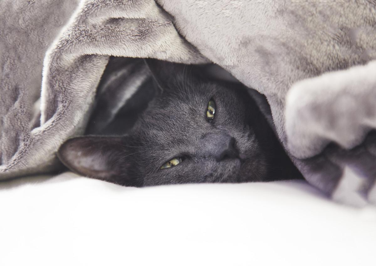 Gato cinza de olhos verdes, olhando para a foto, deitado na cama e embaixo e uma coberta também cinza, mais clara.