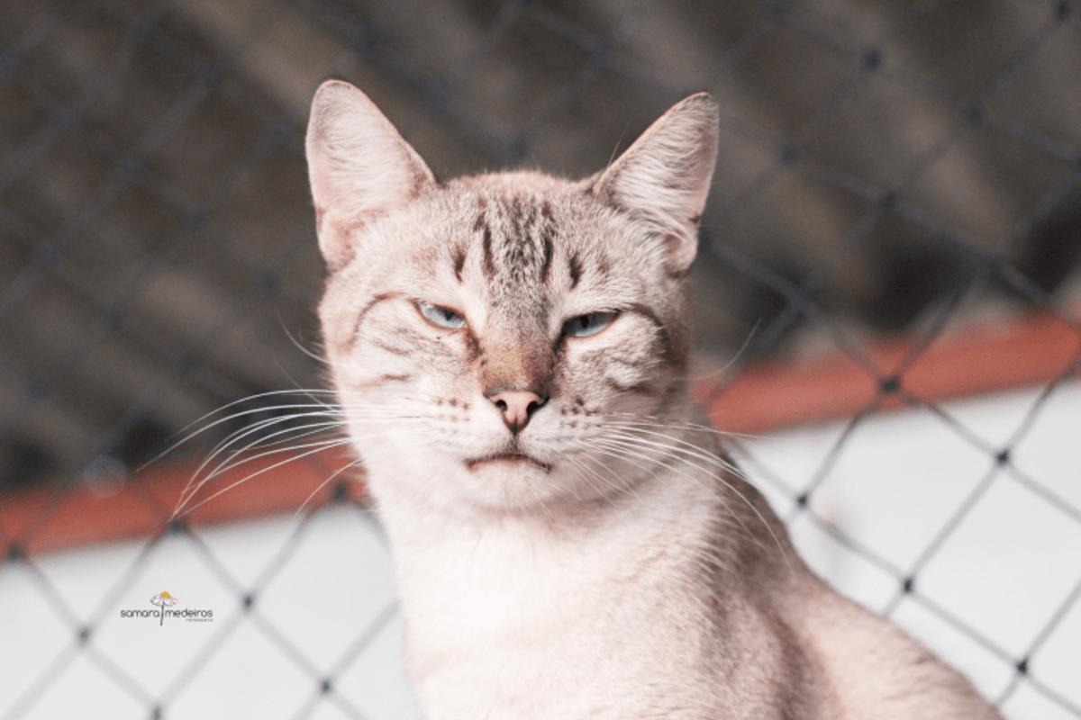 Close no rosto de um gatinho tigrado de cinza claro e cinza escuro, com cara de preguiça.