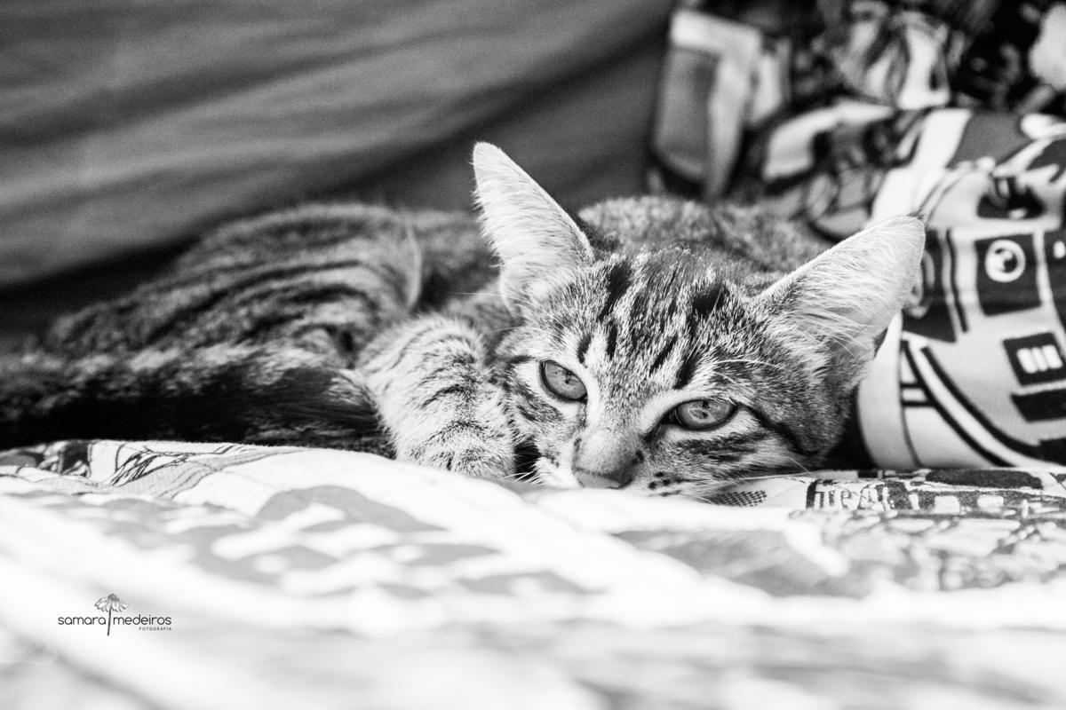 foto em preto e branco de uma gatinha tigrada deitada e olhando para a câmera