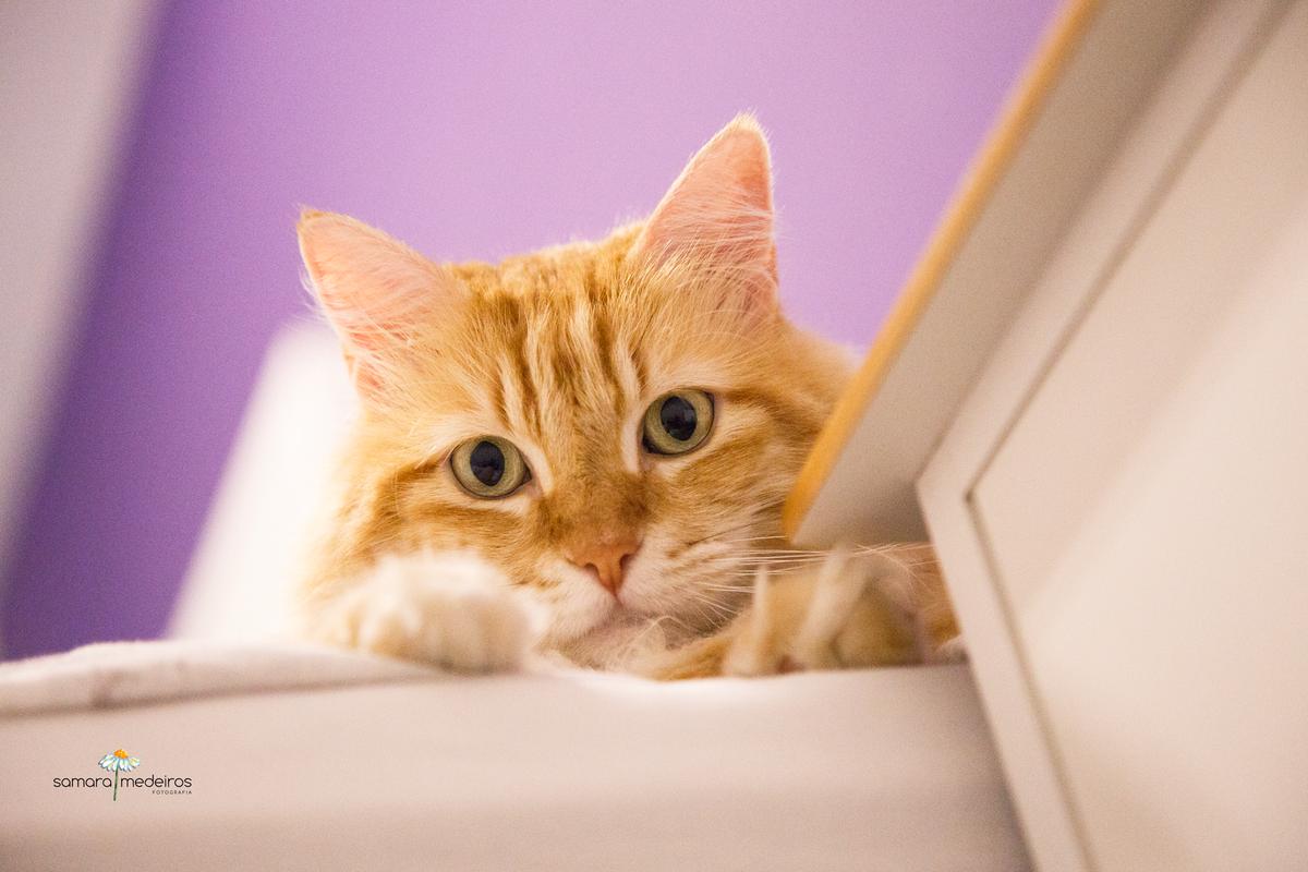 Gato amarelo parcialmente escondido pela cama, em uma foto feita de um ângulo baixo. O pet olha para a câmera.