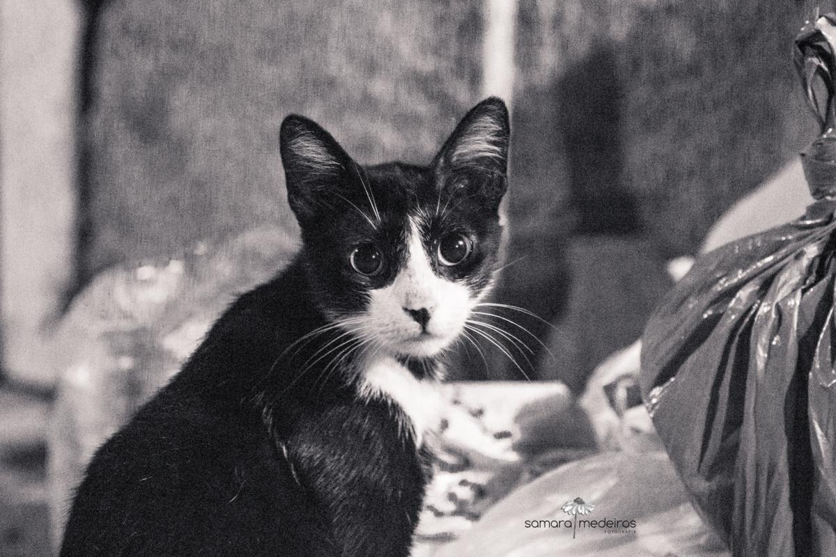 Foto em preto e branca de um gato preto com manchas brancas, abandonado nas ruas, em cima de um monte de lixo.