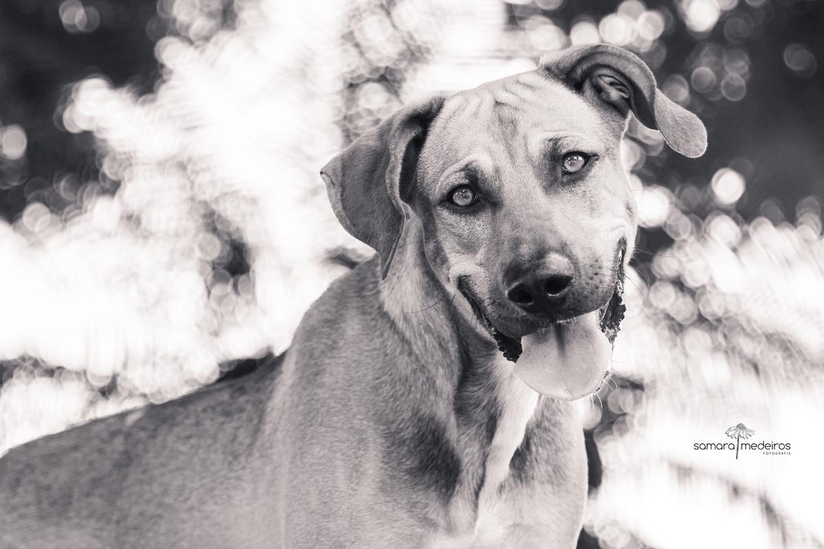 Foto em preto e branca de um cão de rua, olhos claros, orelha caída, com a língua para fora e uma expressão de sorriso, ao fundo luzes desfocadas.