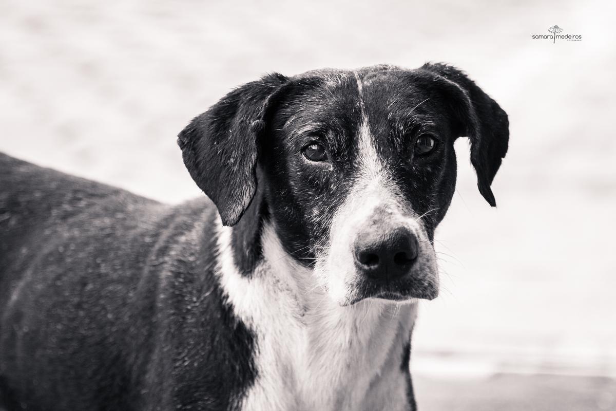 Foto em preto e branco de um cão grande abandonado, sujo com olhar amedrontado.