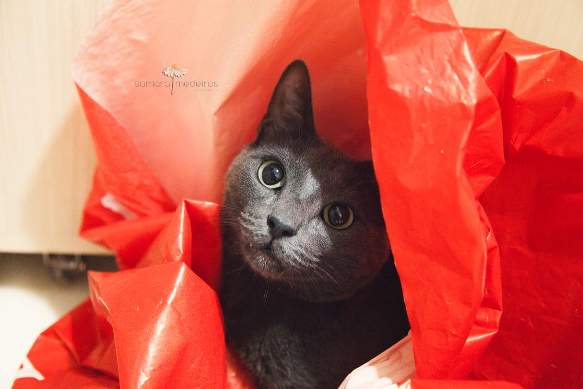 Gato cinza dentro de uma sacola vermelha, com as pupilas bem dilatadas, observando seu tutor, que não aparece na foto.