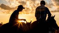 de Fotografia Equestre