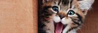de Graminha para Gatos 100% Natural