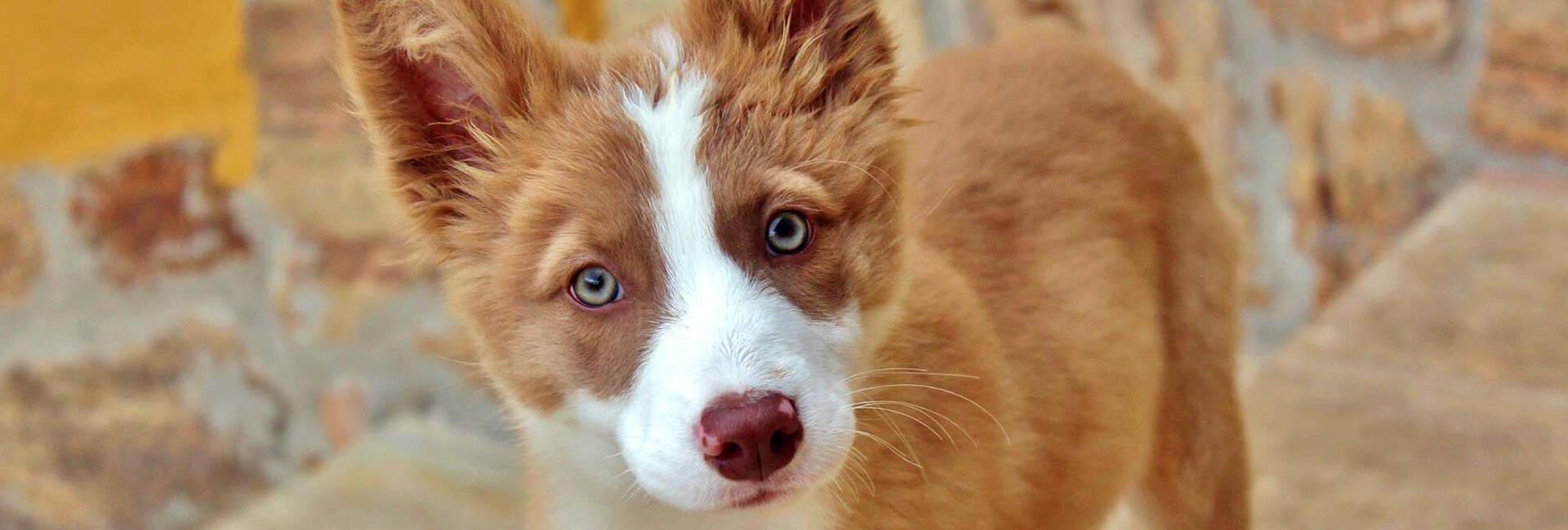 Conheça nosso dog de GAIA