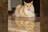 Pet In Home de Ensaio no Lar