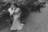 noivos no banco da praça de pre-wedding Eduarda e Thiago