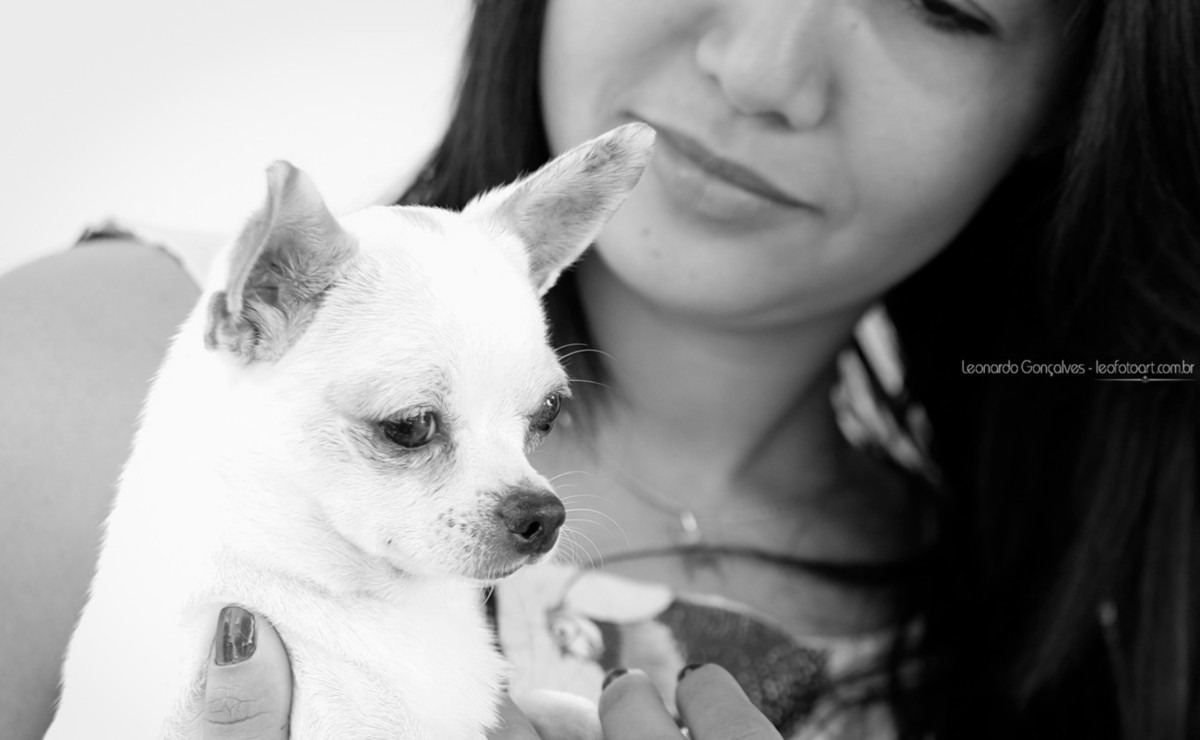 Chiuauaua - foto Pet para empresa, trabalho feito por um profissional
