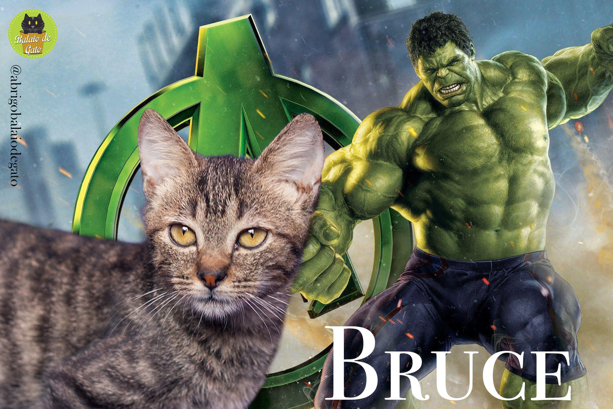 Gatinho tigrado de olhos amarelos de nome Bruce com uma imagem do Bruce Banner transformado em Hulk ao fundo.