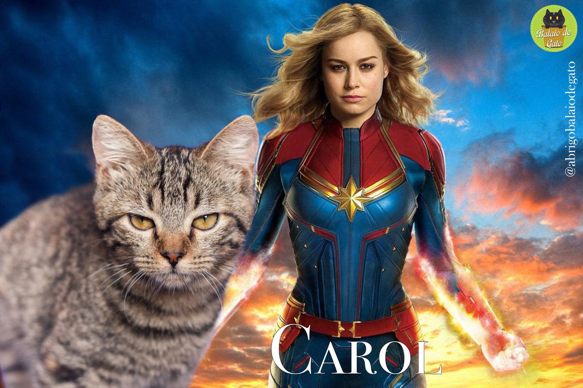 Gatinha tigrada de olhos amarelos encarando a câmera fotográfica com uma imagem da Carol Denvers Capitã Marvel ao fundo.