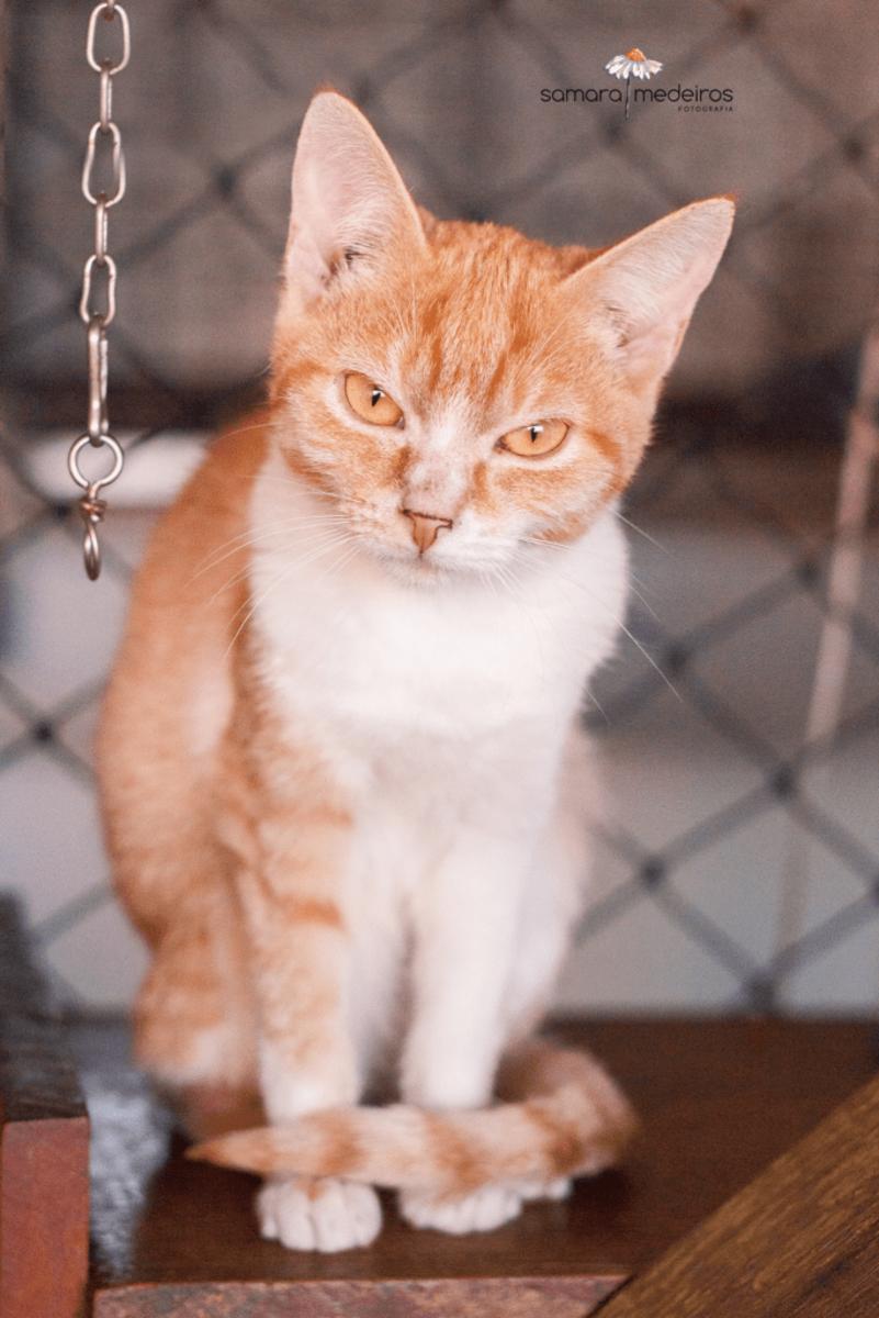 Gatinha amarela e branca sentada olhando com cara de brava para a câmera.