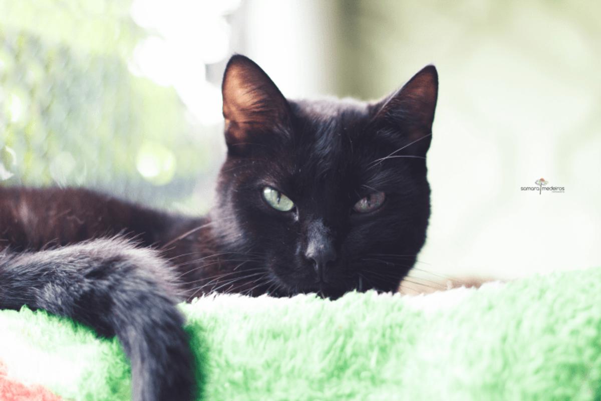 Gatinho preto de olhos verdes deitado em um tapete verde e olhando com cara de bravo para a câmera.