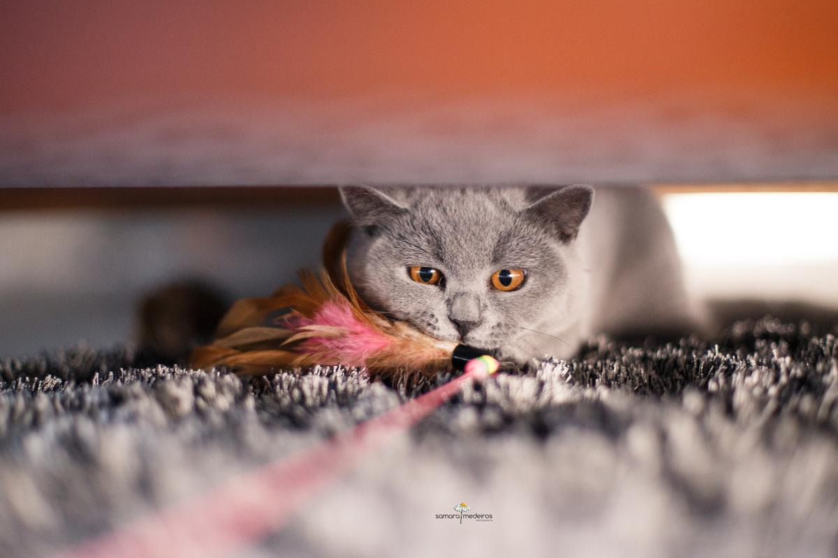 gata cinza embaixo do sofá e em cima de um tapete da mesma cor dela, mordendo um brinquedo de penas e encarando a camêra