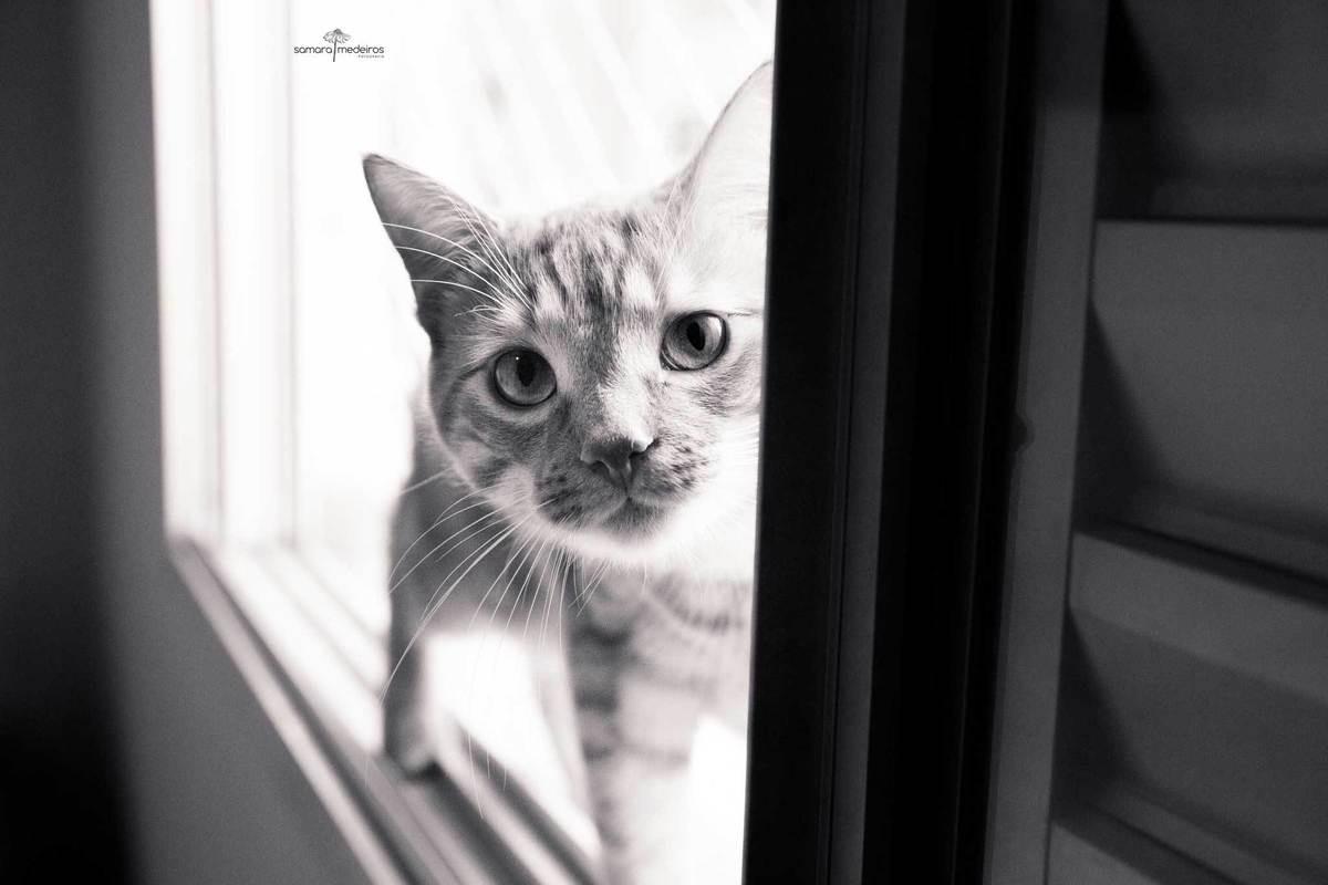 Foto em preto e branco de um gatinho na janela com o focinho bem perto da câmera.