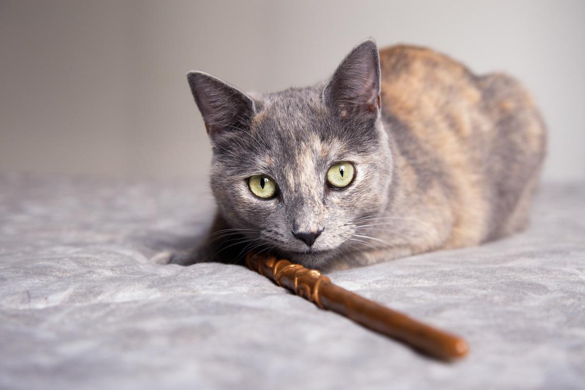 gata cinza e dourada deitada na cama com uma varinha de harry potter perto dela