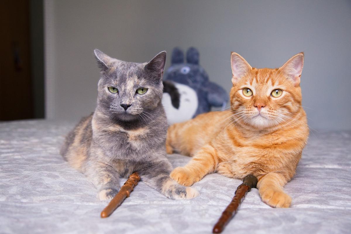dois irmãos gatos, uma cinza e o outro amarelo, deitados em cima da cama com as patas se tocando