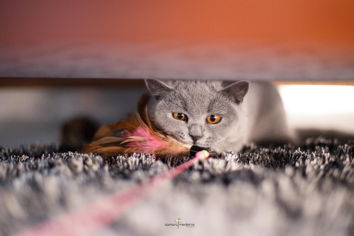 Gata embaixo do sofá em sua casa, brincando com uma fita e penas, em cima de um tapete da mesma cor dela.