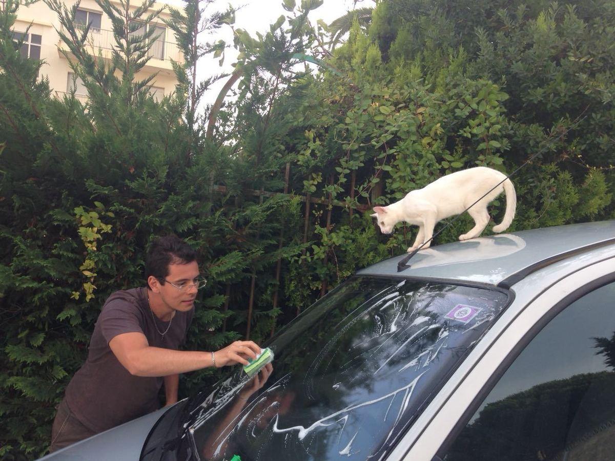 Pessoa lavando carro e um gato observando