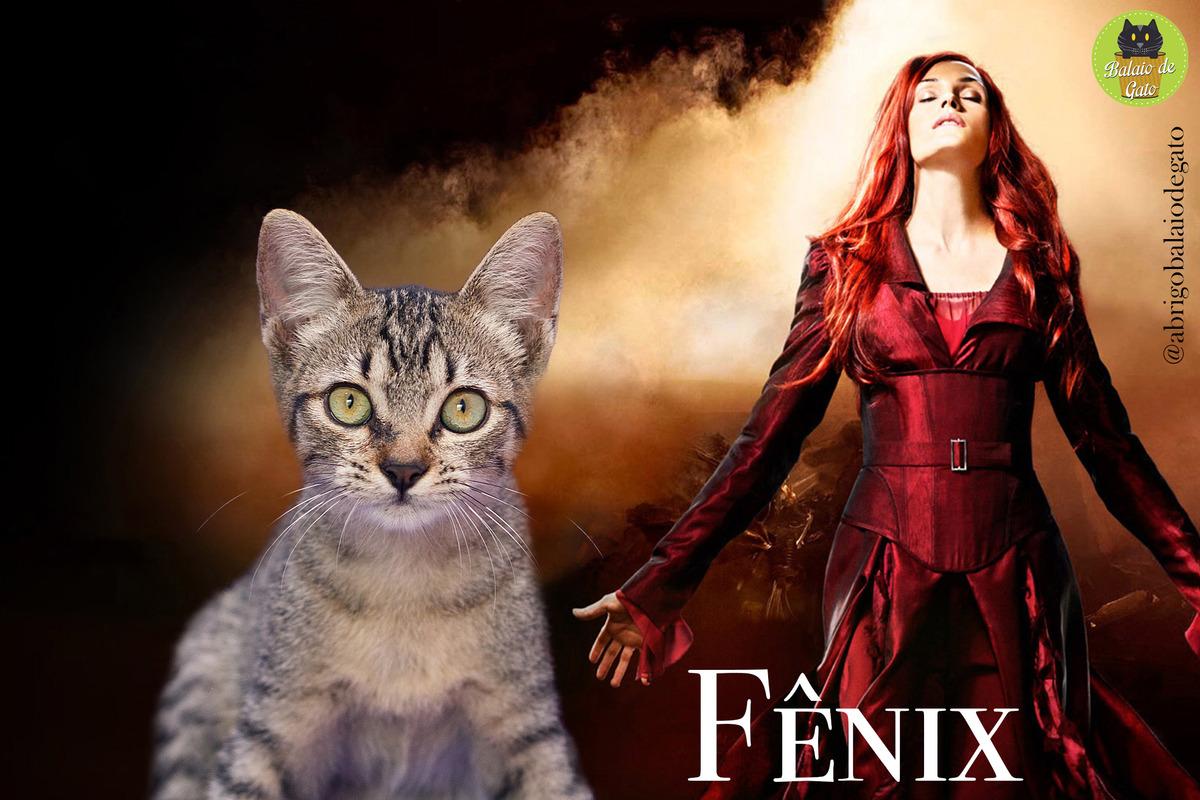 Gatinha tigrada de olhos verdes de nome Fênix com a personagem dos X-Men Jean Grey Fênix ao fundo.