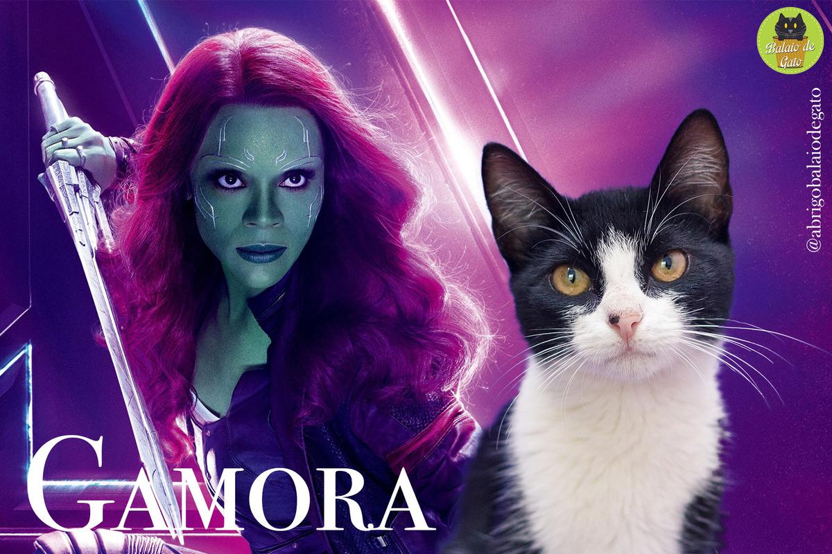 Gatinha preto e branca de olhos amarelos de nome Gamora olhando para a câmera fotográfica com uma imagem da personagem Gamora ao fundo.