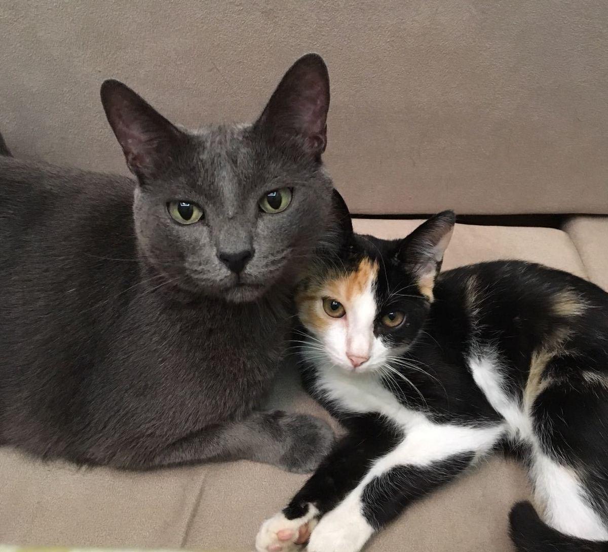 Dois gatos abraçados em um sofá olhando para a câmera.