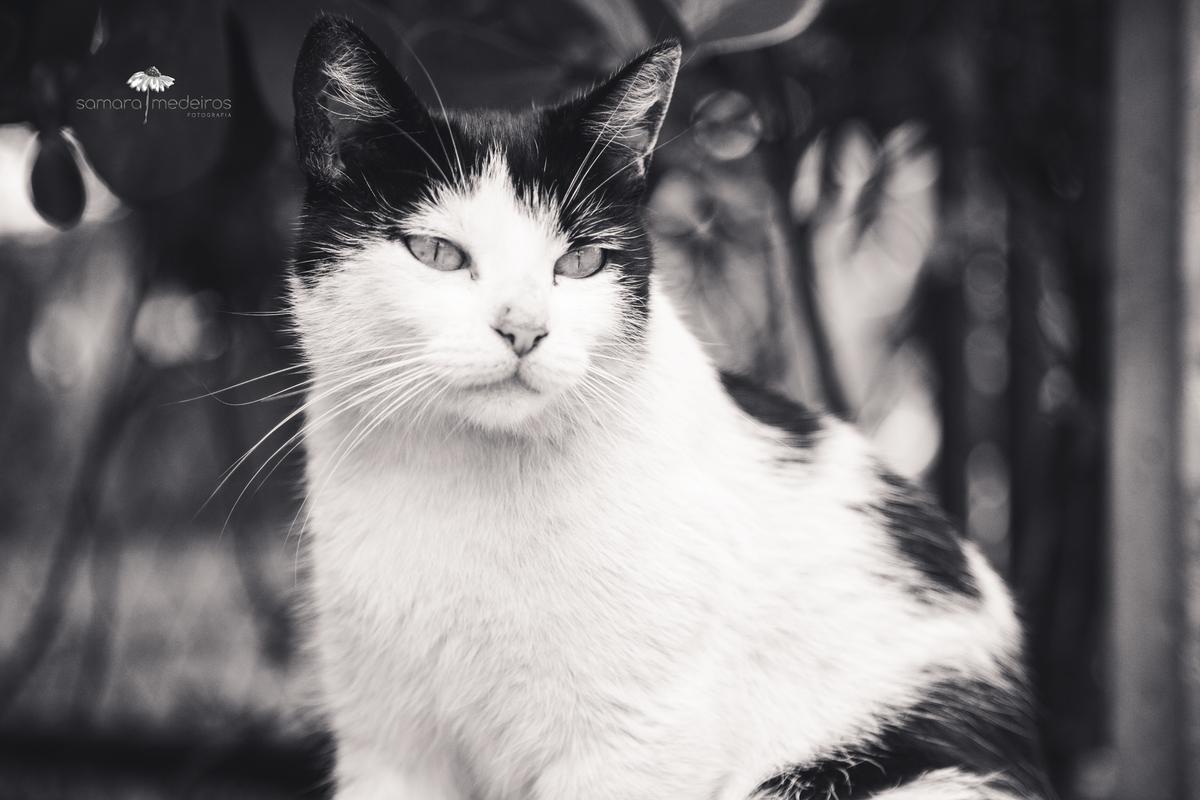 Foto em preto e branca de uma gatinha branca com manchas pretas com folhas de árvore ao fundo.