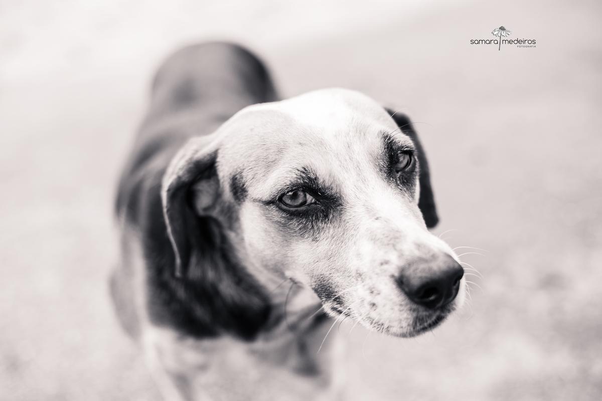 Foto em preto e branco de uma cadela olhando meio de lado para a câmera com uma expressão meio desconfiada.