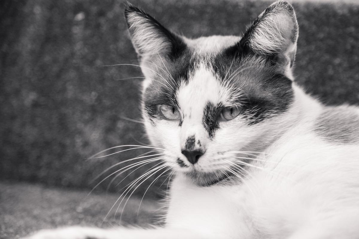 Foto em preto e branco de um gato abandonado em um parque, deitado olhando para a câmera.