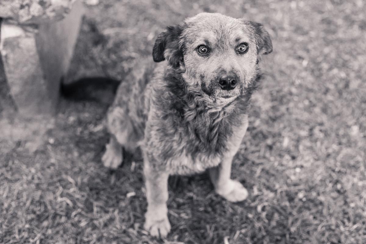 Foto em preto e branco de um cachorro de rua abandonado, muito sujo, sentado, olhando para a câmera.