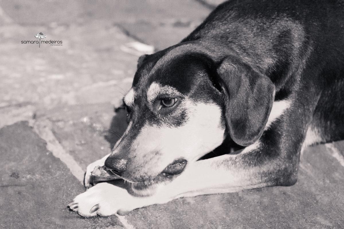 Foto em preto e branca de um cão abandonado deitado na rua tentando comer algo que jogaram para ele.