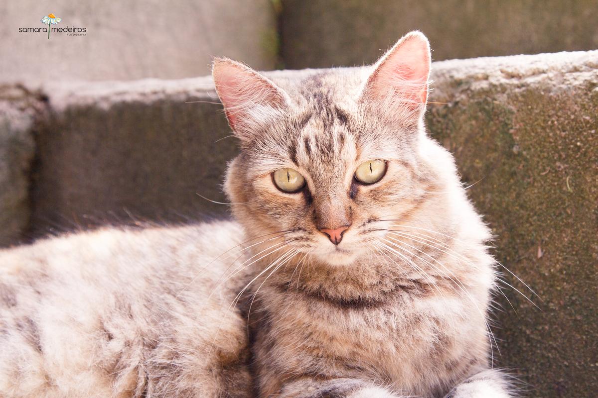 Close na cara de uma gatinha rajada de cinza, que está deitada em uma escada.