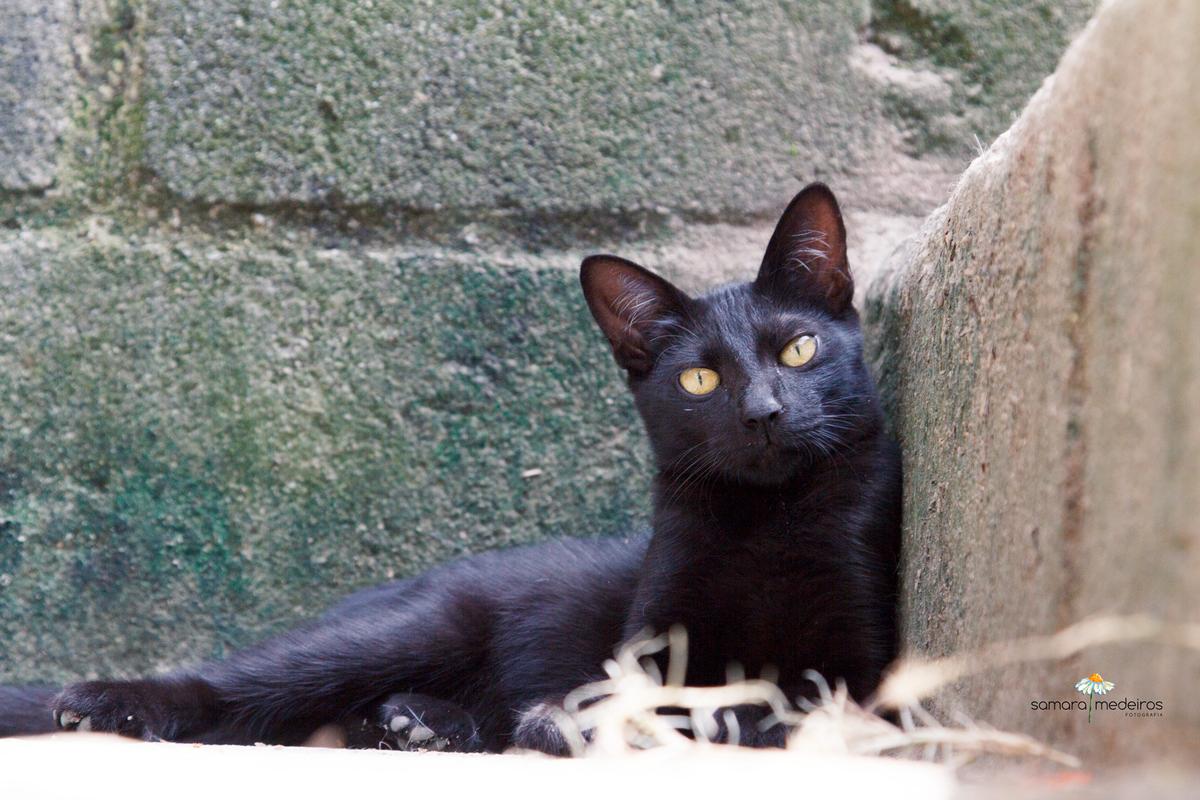 Gatinho preto deitado em uma escada, olhando para a câmera.