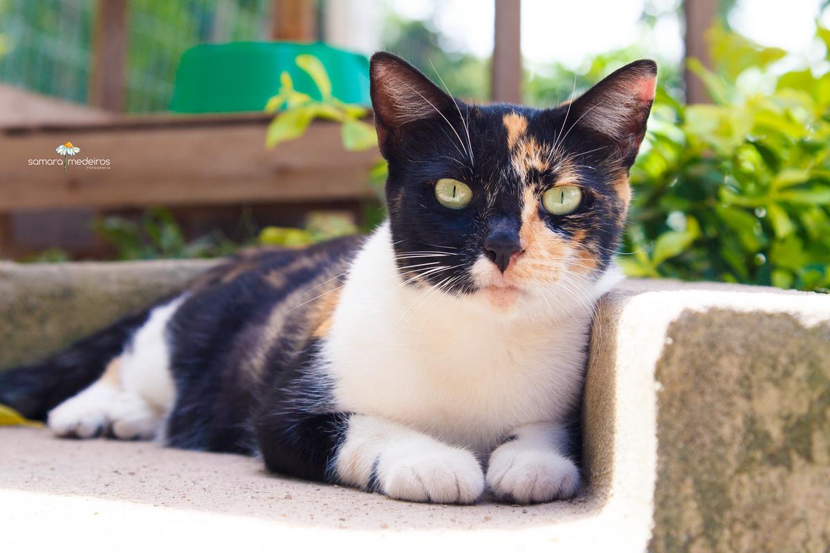 Gatinha tricolor, com a carinha dividida em preto e amarelo, deitada em uma escada, olhando para a câmera.