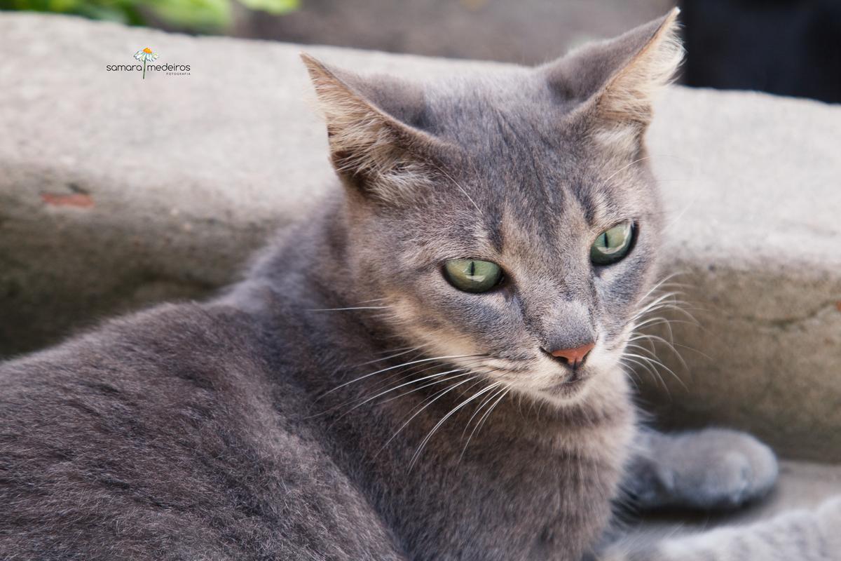Gatinha cinza de olhos verdes deitada na escada.
