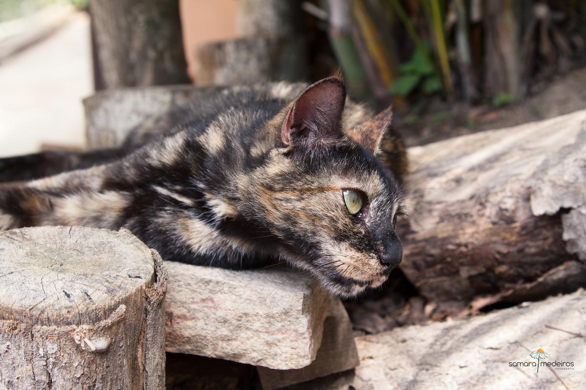 Gatinha escaminha, marrom e dourada, deitada em uns troncos de madeira e olhando para o lado.