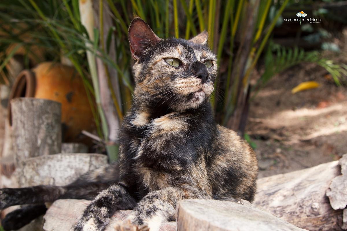 gata escaminha dourada e marrom deitada em algumas pedras e olhando para o lado com pose imponente