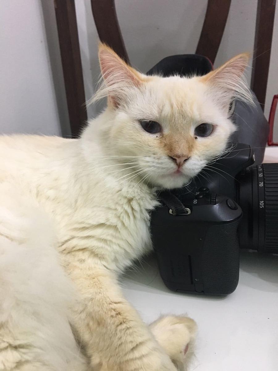 Gatinha deitada em uma câmera fotográfica