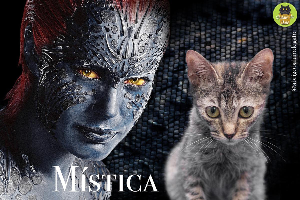 Gatinha tigrada de olhos verdes de nome Mística sentada olhando para a foto e uma imagem da personagem Mística Raven Darkhölme ao fundo.