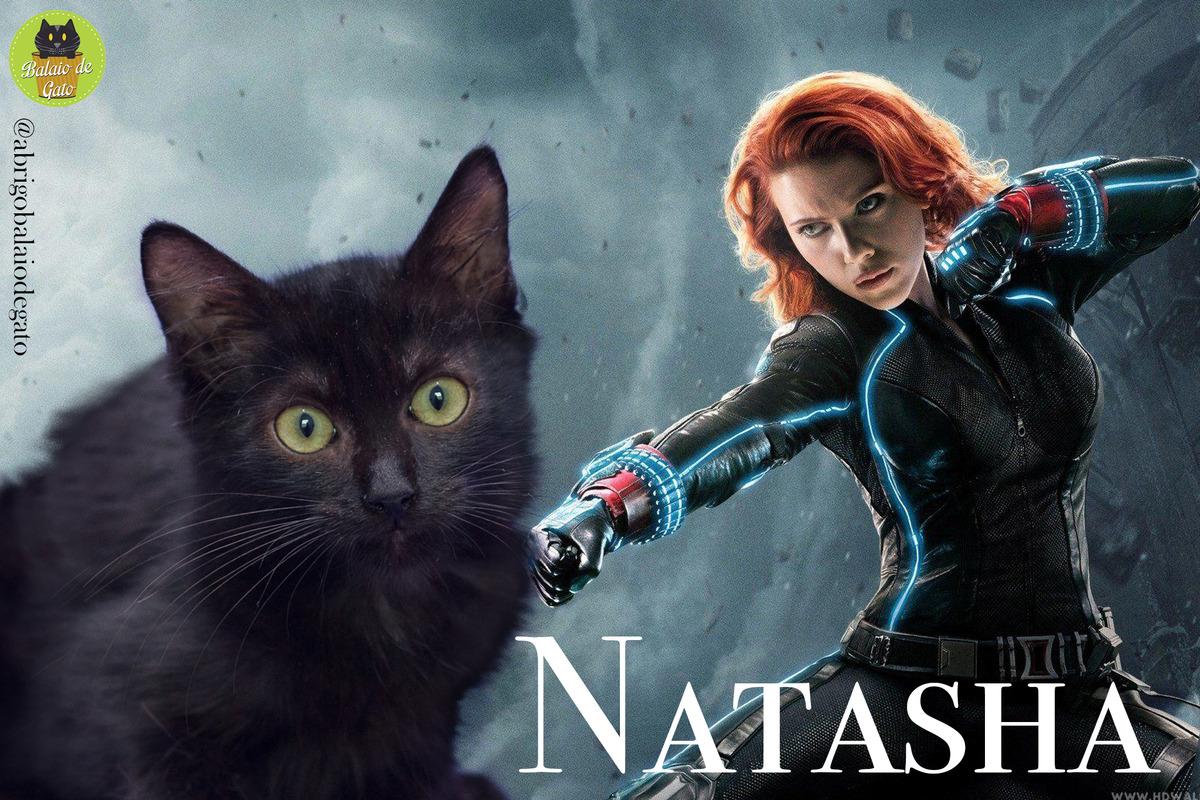 Gatinha preta peluda de olhos verdes de nome Natasha encarando a câmera fotográfica com uma imagem da Natasha Romanoff Viúva Negra ao fundo.