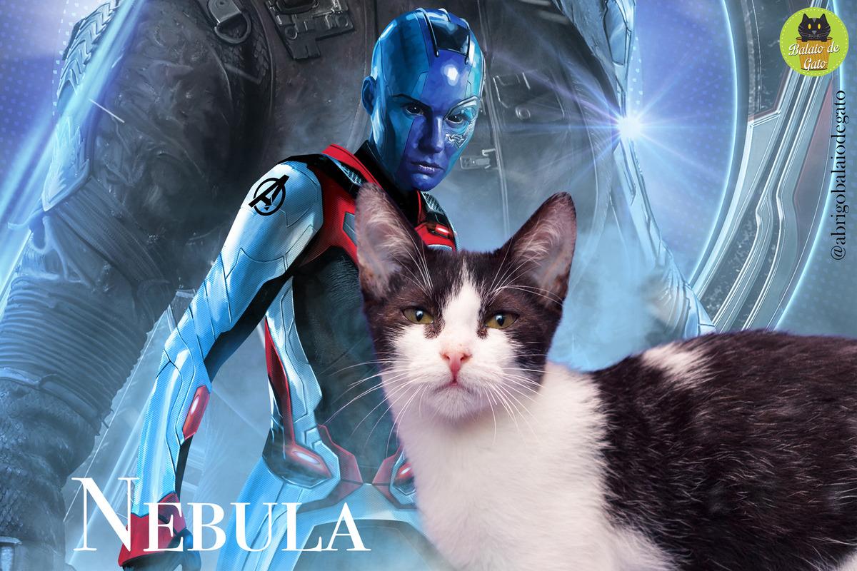 Gatinha preto e branca de olhos penetrantes de nome Nebula olhando para a câmera fotográfica com uma imagem da personagem Nebula ao fundo.