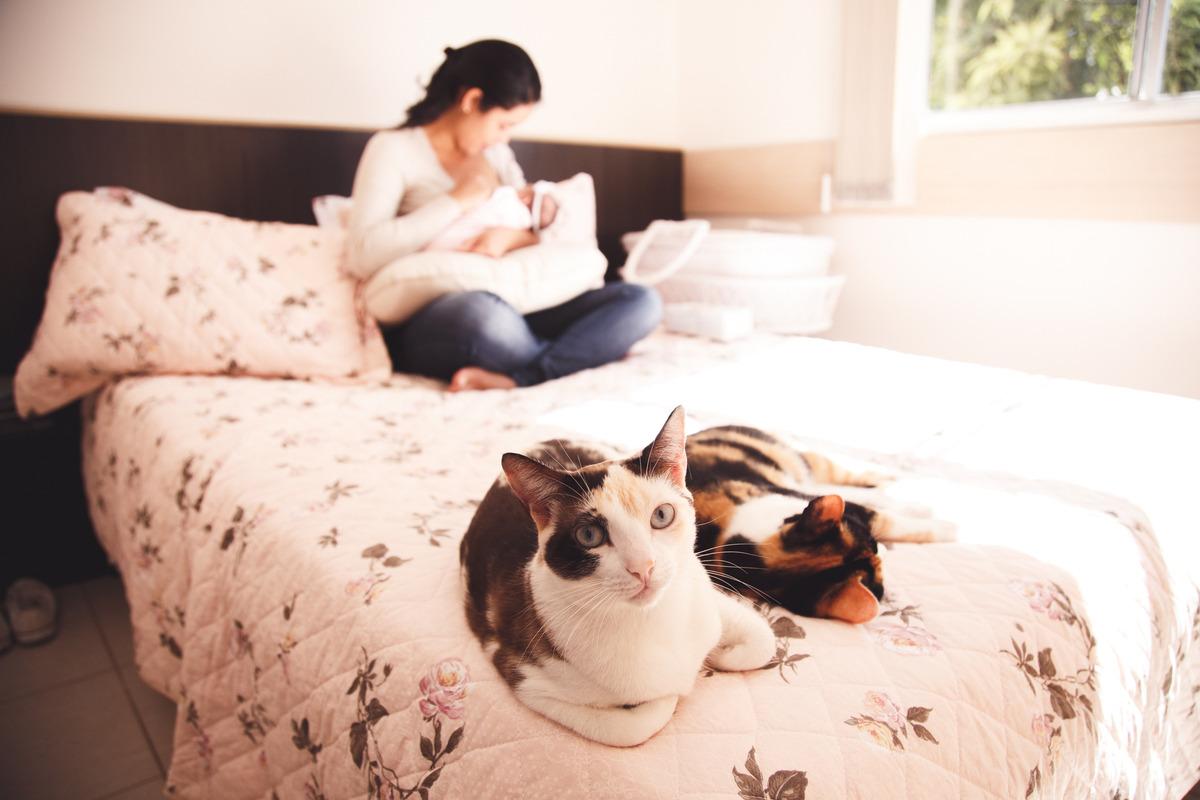 gatinha em primeiro plano, olhando para a camera e mãe com sua bebê ao fundo sem foco, amamentando.