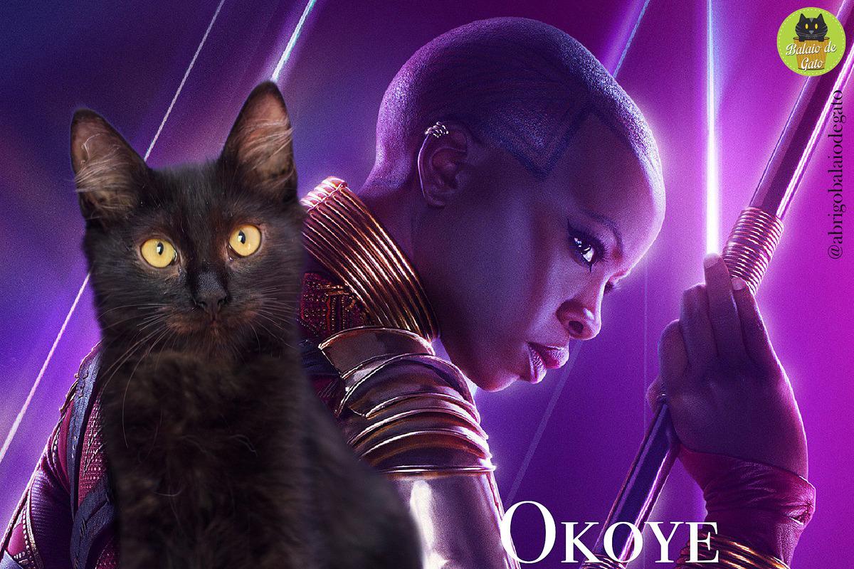 Gatinha preta peluda de olhos amarelos de nome Okoye com uma imagem da lutadora de Wakanda Okoye ao fundo.